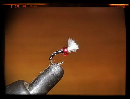 Micro Flies00001